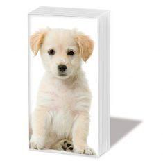 Taschentücher SNIFF - Puppy