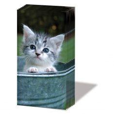 Taschentücher SNIFF - Sweet Kitty