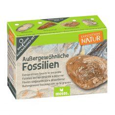 Expedition Natur, Mini-Ausgrabungsset - Fossilien