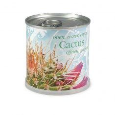 Blumendose Kaktus