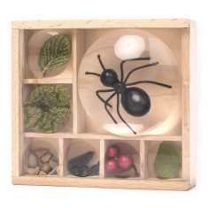 Insektenkasten - Bug Box, Huckleberry