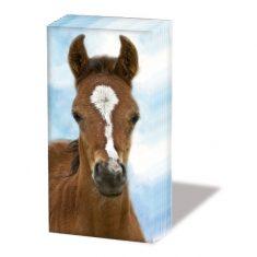Taschentücher SNIFF - Foal